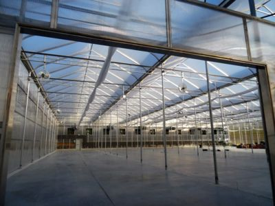 inside-large-scale-greenhouse.jpg