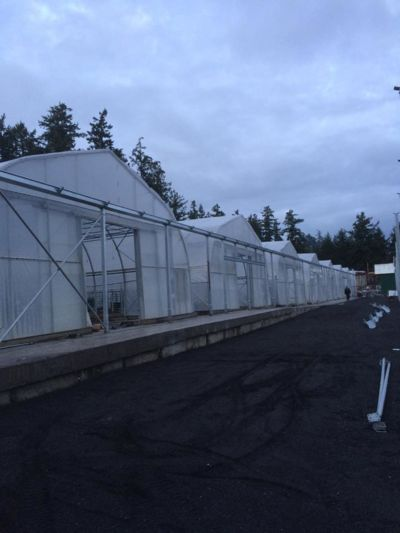 36x75-greenhouses-in-a-row.jpg