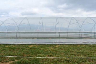 fraser-valley-greenhouse.jpg