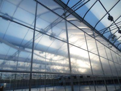greenhouse-wall.jpg