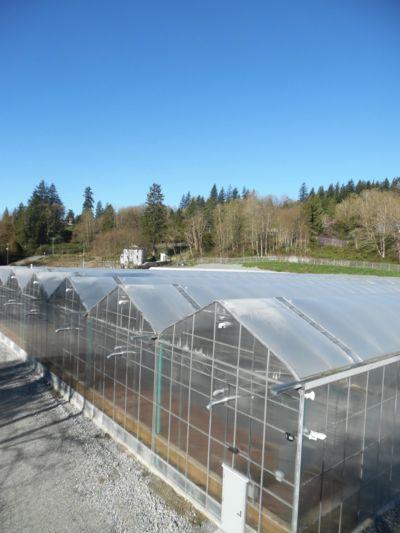 fraser-valley-gutter-connected-greenhouses.jpg