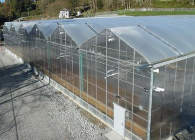 gutter-connected-greenhouses.jpg
